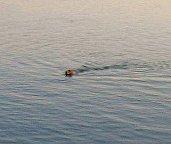 Otter Morro Bay