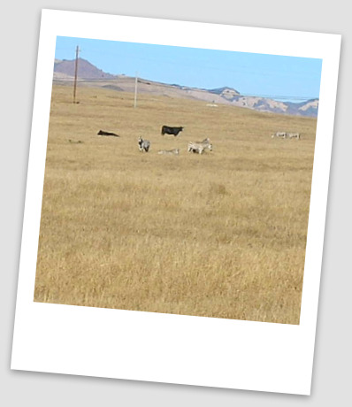 zebra hearst ranch