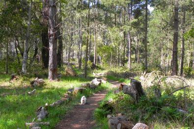 walking trail cambria, ca