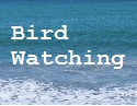 Bird Watching Central Coast