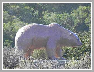 los osos bear
