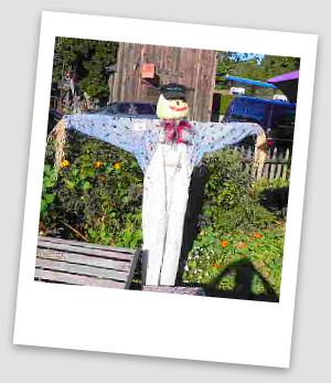 scarecrow harvest festival cambria