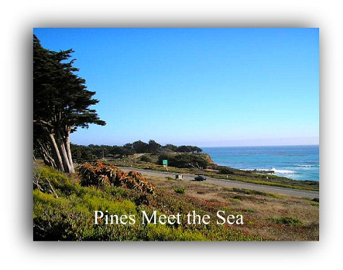 Pines Meet Sea
