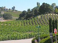 the vineyards of paso robles, ca
