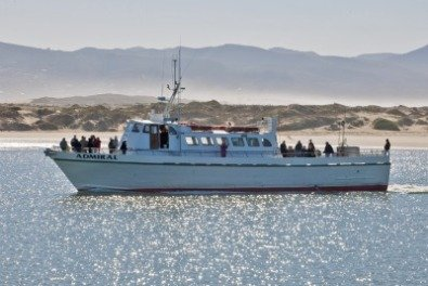 Sport fishing charters on the central coast for Morro bay deep sea fishing