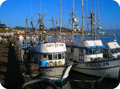 fishing morro bay